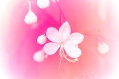 playnig света цветка предпосылки Стоковые Изображения RF