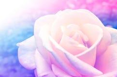 playnig света цветка предпосылки Стоковое Изображение