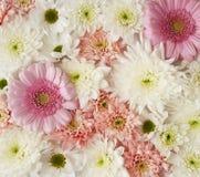 playnig света цветка предпосылки Стоковые Фото