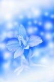 playnig för bakgrundsblommalampa Royaltyfri Bild