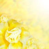 Playnig mit Leuchte Gelbe Azaleenblumen Stockbild