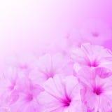Playnig mit Leuchte Windenblumen Stockbild