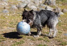 Plays with a ball Royalty Free Stock Photo