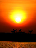 Playtime. Dogs playing on the beach while the sun sets behind them Royalty Free Stock Photo