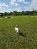 Playtime. Playing in the dog park Stock Photography