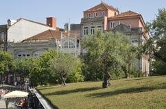 Plaza με τις ελιές Στοκ Φωτογραφία