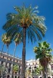 plaza της Βαρκελώνης reial Στοκ Εικόνες