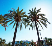 Plaza Beach hotel by the roundabout. SANTA PONSA, MALLORCA, SPAIN - SEPTEMBER 6, 2016: Plaza Beach hotel by the roundabout and sun behind palm trees on a sunny stock photo
