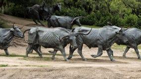Plaza bronzea del pioniere della scultura del manzo, Dallas Fotografia Stock