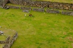 Plaza central em Machu Picchu Fotos de Stock Royalty Free