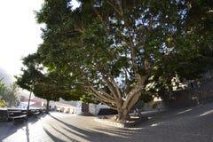 Plaza de Masca μέσω ενός φακού fisheye Στοκ Εικόνες