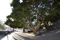 Plaza de Masca tramite un fish-eye Fotografia Stock