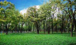 Plaza della natura Fotografia Stock Libera da Diritti