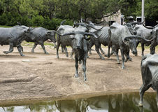 Plaza en bronze de pionnier de sculpture en boeuf, Dallas photo stock