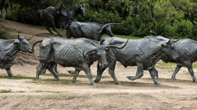 Plaza för banbrytare för bronsrådskulptur, Dallas Arkivfoto