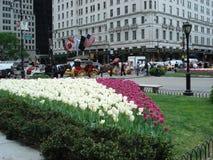 Plaza grande do exército de Central Park, New York Imagem de Stock Royalty Free