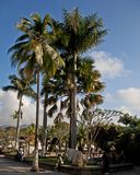 Plaza principale, ¡ n Ruinas di Copà fotografia stock