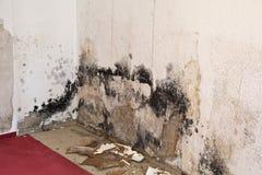 Pleśnienie lejnia w żywym pokoju Zdjęcia Royalty Free