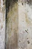 pleśniowa ściana obraz royalty free
