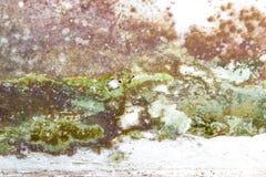 Pleśniowa ściana Zdjęcie Royalty Free
