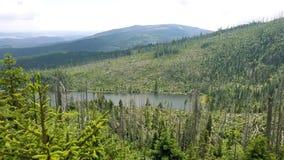 Plešné jezero. Plešné jezero and destroyed tree around Stock Image