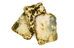 Pleśniowy chlebowy plasterek na bielu Obrazy Stock