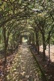 Pleached Allee Glen Burnie Gardens Winchester VA Royaltyfri Bild
