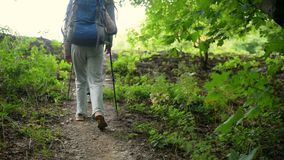 Pleasant aged couple of tourists enjoying Nordic walking. Devoted trevelers. Nice aged couple of tourists walking in the forest along the path and trying Nordic stock video footage