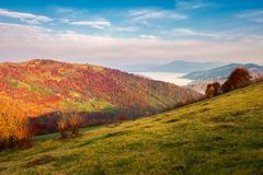 Pleasant autumn weather at sunrise. Beautiful landscape in mountains. pleasant autumn weather at sunrise. forest in reddish foliage. fog in the distant valley stock photos