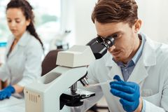 Pleasant bearded man studying a sample under the microscope. Detailed research. Pleasant bearded men holding a test sample while studying it under the microscope royalty free stock image