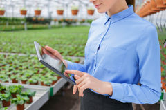 Pleasant greenhouse owner controlling her business. Stay modern. Close up of tablet in hands of positive successful businesswoman holding it while controlling Stock Image