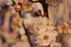 Landscape natural wildflowers village cherry royalty free stock images