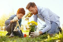 Pleasant nice father and son spending time together. In the garden. Pleasant nice father and son planting flowers while spending time together royalty free stock images