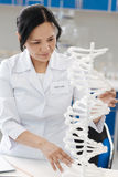 Pleasant nice woman studying genetics. Modern genetic studies. Pleasant nice intelligent woman wearing a labcoat and looking at the gene model while studying royalty free stock photography