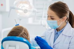 Pleasant professional dentist doing her job. Tooth treatment. Pleasant professional female dentist holding dental instruments and using them while doing her job stock photography