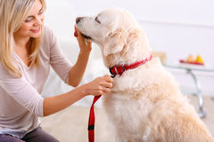 Pleasant woman having fun with a dog Royalty Free Stock Images