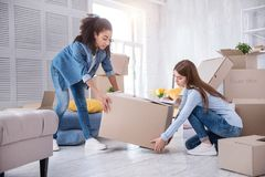 Pleasant young girls lifting up heavy box together. Helping one another. Pretty young girls helping each other and lifting up a heavy box together while packing Royalty Free Stock Photography