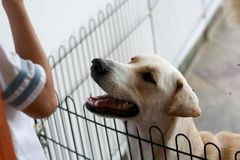Please adopt me!. Dog behind cage looking at kid Stock Photography