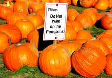 Please do not walk on the pumpkins notice Royalty Free Stock Photos