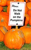 Please do not walk on the pumpkins sign Royalty Free Stock Photography