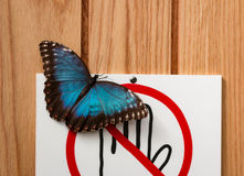 Please Don`t Touch. A butterfly had landed on a sign asking the public not to touch the butterflies. I thought it was kind of amusing royalty free stock photography