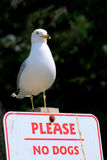 Seagull on no dogs sign Royalty Free Stock Images