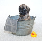 Please Not a Bath! Stock Photography