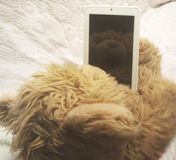 Pleased toy bear cub looks at the tablet, the back view, you can see the reflection of the bear cub in the tablet screen smartpho stock photography