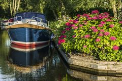 Summer Dutch landscape with small wooden pier. Pleasure yacht ashore with blooming burgundy hydrangeas. royalty free stock image