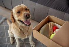 Pleasured-Hund, der nahe Geschenk findet stockfoto
