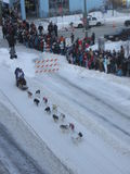 Plechtig begin van Iditarod Royalty-vrije Stock Foto's