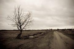 Plechtige boom door de weg stock foto's