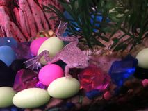 African Dwarf Frog. This an African Dwarf Frog living in my tropical fish tank Stock Photo