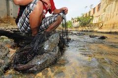 Plecostomus (吮吸者鱼)外籍人硬币爆发在河 免版税图库摄影